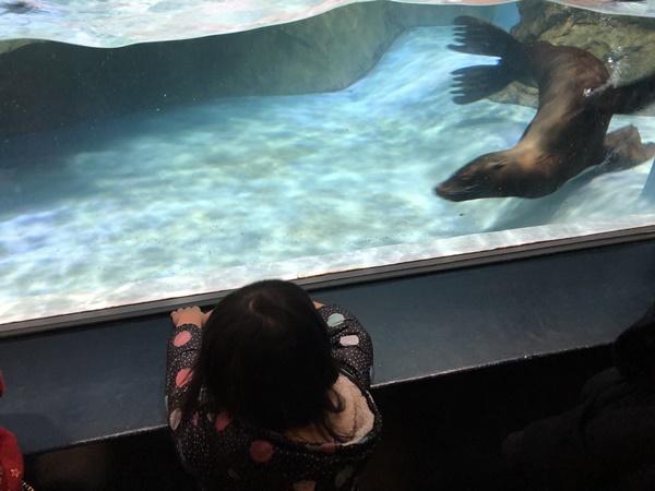 ぐるぐる泳ぐアシカ