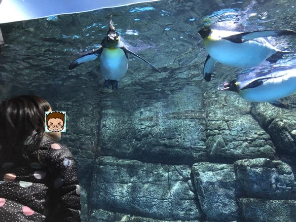 間近に見るペンギン