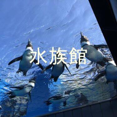 東京・神奈川おすすめ水族館!週末に子供と遊びに行きたい全天候型スポット!