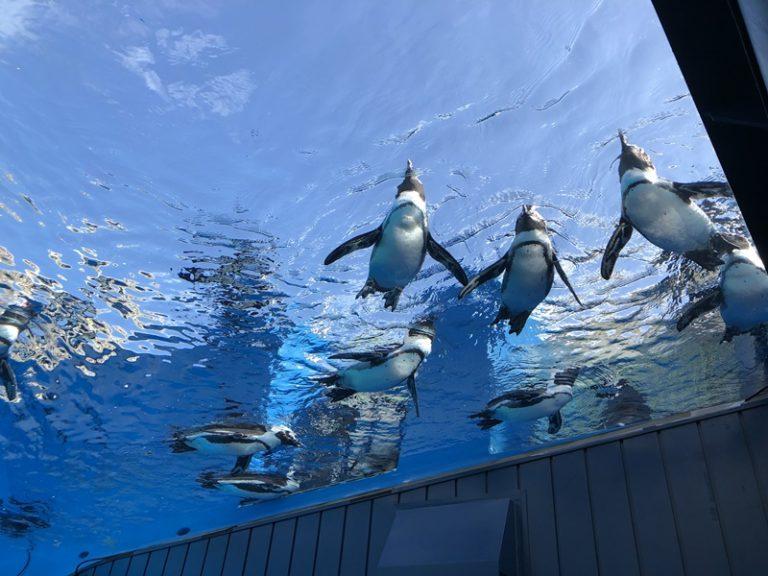 頭上のペンギン
