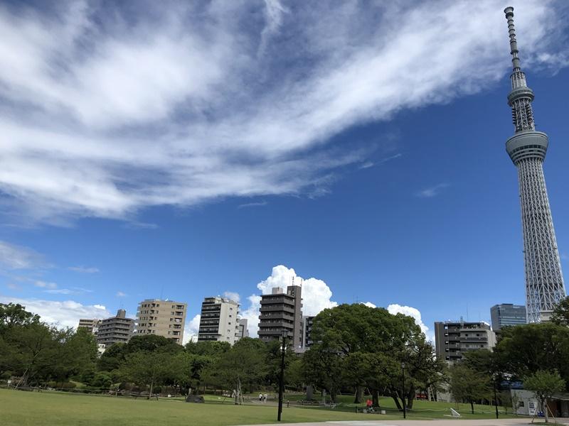 東京ミズマチ芝生エリア