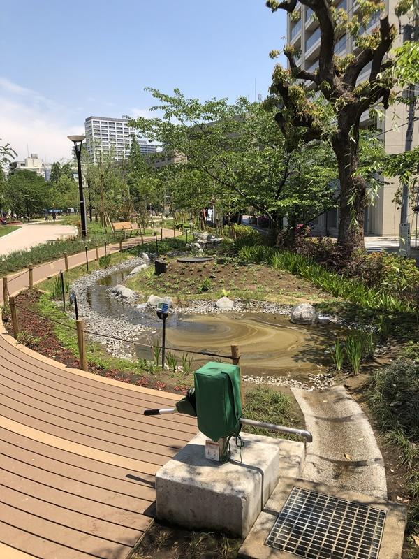 築地川公園の小川