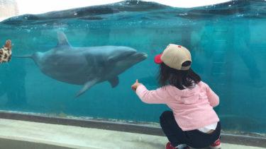 しながわ水族館!イルカやアザラシを間近に見れて2歳の子供も楽しめる品川の水族館!