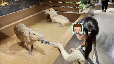 モフアニマルワールド!横浜みなとみらいにオープンした子供と遊びに行きたい動物と遊べるスポット!