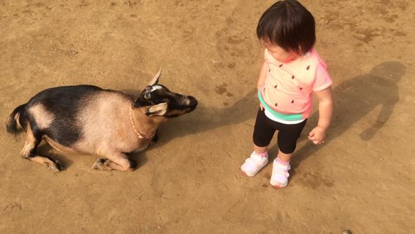 アンデルセン公園動物ふれあい