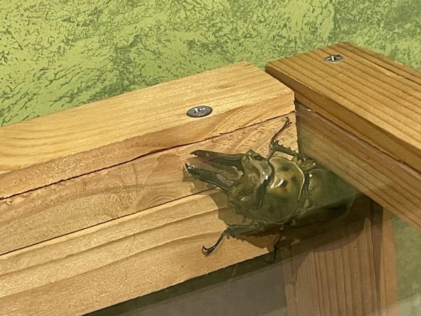 かいけつゾロリ昆虫イベント